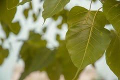 Πράσινο θολωμένο φύλλα υπόβαθρο στοκ φωτογραφίες