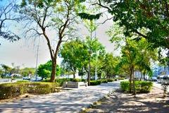 Πράσινο θόριο πάρκων στοκ εικόνα