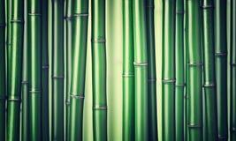 πράσινο διάνυσμα απεικόνισης μπαμπού ανασκόπησης Στοκ Εικόνα