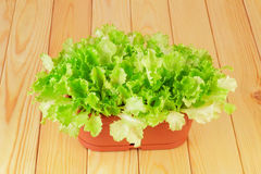 πράσινο διάνυσμα δοχείων φυτών απεικόνισης Στοκ φωτογραφίες με δικαίωμα ελεύθερης χρήσης