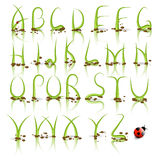 Πράσινο διανυσματικό αλφάβητο χλόης διανυσματική απεικόνιση