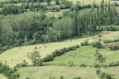Πράσινο λιβάδι με τα δέντρα μια ηλιόλουστη ημέρα στοκ φωτογραφία