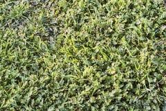 Πράσινο λιβάδι με τα φύλλα του Robert χορταριών και τις λεπίδες της χλόης Στοκ φωτογραφίες με δικαίωμα ελεύθερης χρήσης