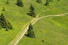 Πράσινο λιβάδι με την άποψη πουλιών δέντρων Στοκ φωτογραφία με δικαίωμα ελεύθερης χρήσης
