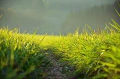 Πράσινο λιβάδι στην ηλιοφάνεια στοκ εικόνα με δικαίωμα ελεύθερης χρήσης