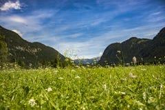 Πράσινο λιβάδι στην κοιλάδα στοκ εικόνα