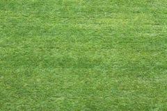 Πράσινο λιβάδι χλόης που αντιμετωπίζεται άνωθεν στη χρήση ως ταπετσαρία ή πλάτη Στοκ φωτογραφία με δικαίωμα ελεύθερης χρήσης