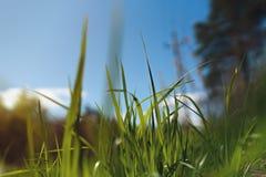 Πράσινο λιβάδι χλόης στο δάσος Στοκ εικόνα με δικαίωμα ελεύθερης χρήσης