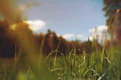 Πράσινο λιβάδι χλόης στο δάσος Στοκ φωτογραφίες με δικαίωμα ελεύθερης χρήσης