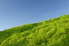 πράσινο λιβάδι χλόης Στοκ φωτογραφίες με δικαίωμα ελεύθερης χρήσης