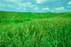 πράσινο λιβάδι χλόης Στοκ εικόνα με δικαίωμα ελεύθερης χρήσης
