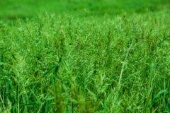 πράσινο λιβάδι χλόης Στοκ Εικόνες