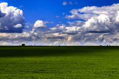 πράσινο λιβάδι χλόης Στοκ Εικόνα