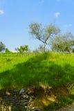 πράσινο λιβάδι Στοκ Εικόνα