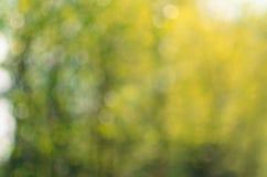 Πράσινο κίτρινο φυσικό υπόβαθρο Στοκ φωτογραφία με δικαίωμα ελεύθερης χρήσης