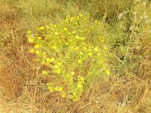 Πράσινο και κίτρινο εγκαταστάσεις και λουλούδι και χλόες στοκ εικόνες