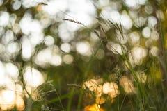 Πράσινο και κίτρινο θολωμένο περίληψη υπόβαθρο φύσης Μακροεντολή, θαμπάδα, bokeh στοκ εικόνες με δικαίωμα ελεύθερης χρήσης