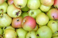 Πράσινο και κόκκινο υπόβαθρο μήλων Στοκ Φωτογραφία