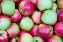 Πράσινο και κόκκινο υπόβαθρο μήλων Στοκ Φωτογραφίες