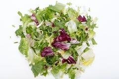 Πράσινο και κόκκινο φύλλο του μαρουλιού Στοκ φωτογραφία με δικαίωμα ελεύθερης χρήσης