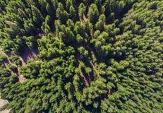 πράσινο και φρέσκο δάσος Στοκ εικόνα με δικαίωμα ελεύθερης χρήσης