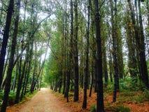 Πράσινο και όμορφο δάσος φύσης με τις ακτίνες ήλιων, Camino de Σαντιάγο Στοκ Εικόνες