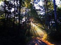 Πράσινο και όμορφο δάσος φύσης με τις ζωηρόχρωμες ακτίνες ήλιων, Camino de Σαντιάγο Στοκ Φωτογραφία