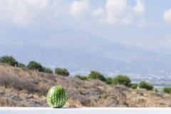 Πράσινο καρπούζι στα βουνά και το υπόβαθρο ουρανού φρέσκια ελιά πετρελαίου κουζινών τροφίμων έννοιας αρχιμαγείρων πέρα από την έκ Στοκ Εικόνες