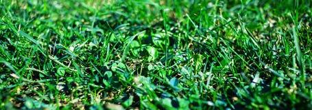 Πράσινο κατασκευασμένο υπόβαθρο χλόης Τομέας της θερινής χλόης, horizont Στοκ Εικόνες