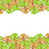Πράσινο καφετί υπόβαθρο φύλλων σφενδάμου Στοκ εικόνες με δικαίωμα ελεύθερης χρήσης