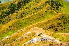 Πράσινο καλλιεργήσιμο έδαφος λόφων στοκ εικόνα με δικαίωμα ελεύθερης χρήσης