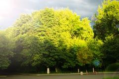 πράσινο καλοκαίρι πάρκων Ο ήλιος είναι από το πουθενά Στοκ φωτογραφία με δικαίωμα ελεύθερης χρήσης