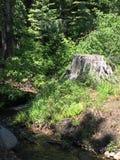 Πράσινο κολόβωμα δασικών δέντρων Στοκ εικόνες με δικαίωμα ελεύθερης χρήσης