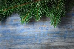 Πράσινο κομψό δέντρο στο υπόβαθρο του παλαιού ξύλινου πίνακα Στοκ φωτογραφία με δικαίωμα ελεύθερης χρήσης