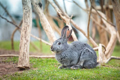 πράσινο κουνέλι χλόης Πάσχας φρέσκο Στοκ Φωτογραφίες