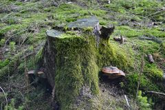 Πράσινο κολόβωμα Στοκ Εικόνα