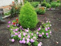 Πράσινο κρεβάτι λουλουδιών στο θερινό κήπο στοκ εικόνες με δικαίωμα ελεύθερης χρήσης