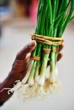 Πράσινο κρεμμύδι με τα φρέσκα κρεμμύδια Στοκ Εικόνα