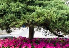 πράσινο κόκκινο δέντρο λο&u Στοκ Εικόνα