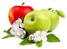 πράσινο κόκκινο δύο μήλων μήλων Στοκ Εικόνα