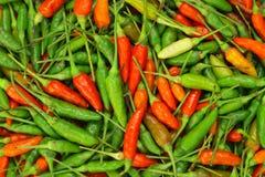 πράσινο κόκκινο πιπεριών τσίλι Στοκ Φωτογραφία