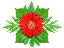 πράσινο κόκκινο φύλλων λουλουδιών Στοκ Φωτογραφίες