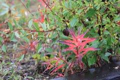 πράσινο κόκκινο Στοκ Φωτογραφίες