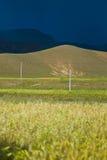 πράσινο κύλισμα λόφων πεδί&omeg στοκ εικόνες