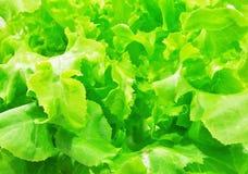 πράσινο λαχανικό Στοκ φωτογραφία με δικαίωμα ελεύθερης χρήσης