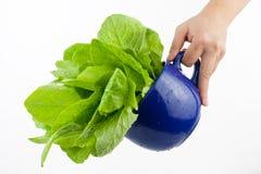 πράσινο λαχανικό Στοκ φωτογραφίες με δικαίωμα ελεύθερης χρήσης