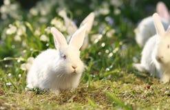 πράσινο λευκό κουνελιών  Στοκ φωτογραφίες με δικαίωμα ελεύθερης χρήσης