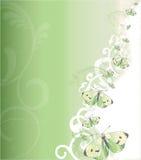 πράσινο λευκό πεταλούδω& Στοκ Εικόνες