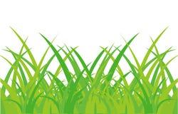 πράσινο λευκό χορταριών ανασκόπησης διανυσματική απεικόνιση