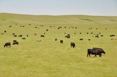 πράσινο λιβάδι αγελάδων τ& Στοκ εικόνα με δικαίωμα ελεύθερης χρήσης